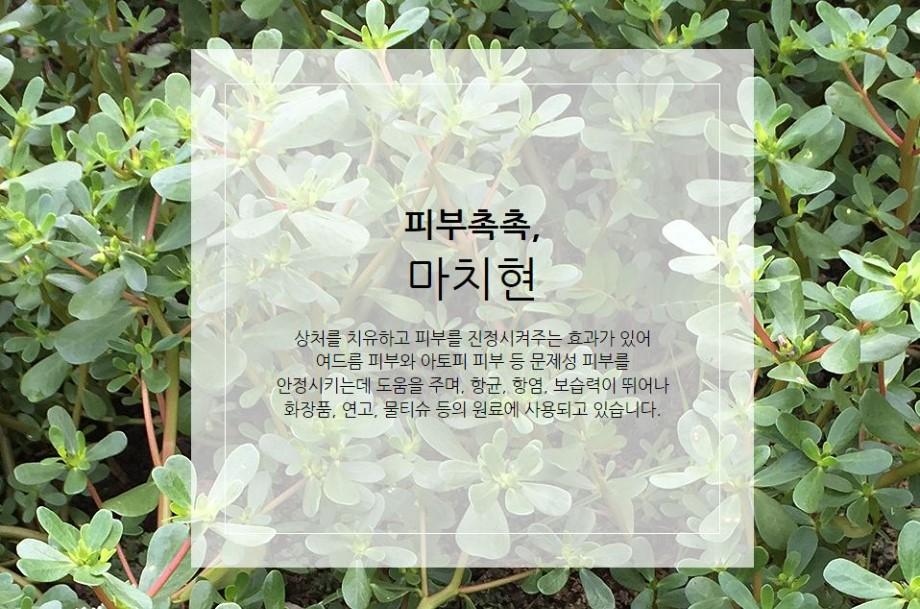 제주인디4.JPG